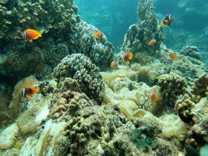 礁岩上熱帶魚