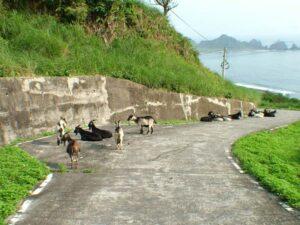 路上遇到羊群